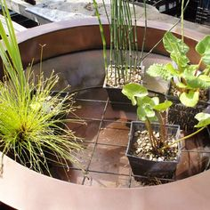 Planting container ponds Tips on planting awater gardening container pond feature withsmall varieties of water plants that will providea patio pond containerfor a smaller garden space. Planting container ponds Tips Garden Spaces, Small Garden, Patio Pond, Garden, Container Plants, Small Water Gardens, Small Space Gardening, Water Plants, Container Gardening