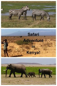 Experience a Safari Adventure in Kenya! A first timer shares her thoughts on traveling from America to Kenya and fulfilling this bucket list item!