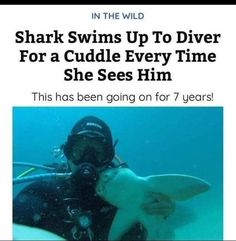 Wholesome shark More memes, funny videos and pics on Funny Animal Memes, Cute Funny Animals, Cute Baby Animals, Funny Cute, Funny Memes, Animal Quotes, Funny Videos, Shark Swimming, Cute Stories