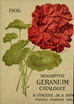 Front cover of 'Descriptive Geranium Catalogue' 1906 from R. Vincent, Jr. & Son. White Marsh, Md. U.S. Department of Agriculture, National Agricultural Library Biodiversity Heritage Library. archive.org