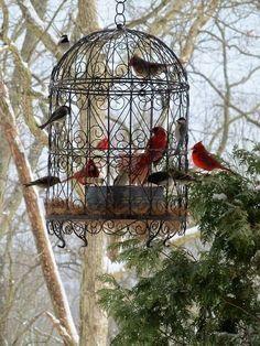 Beautiful bird-feeder idea!
