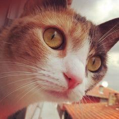 She's my girl Tarçın...