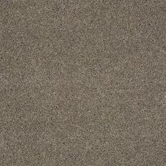 Color: 00503 Artic Frost CCS10 Pashmina I - Shaw Caress Carpet Georgia Carpet Industries