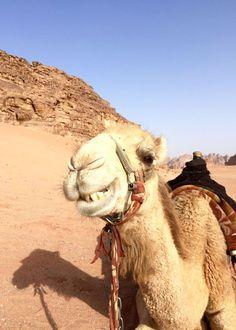 Kamel im Wadi Rum. Jordanien: Highlights und Impressionen von einer Rundreise mit Schulkind. Mehr dazu auf www.berlinfreckles.de Wadi Rum, Highlights, Animals, Traveling With Children, School Children, Camel, Round Trip, Travel Destinations, Tips