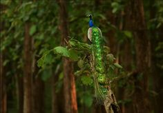 Regal Splendor Photo by Sreesha Belakvaadi — National Geographic Your Shot