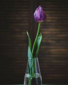 Solo | Still Dacha Life  •  •  •  #natureaddict #nature #naturesbeauty #nature_obsession #stilllifephotography #dailydoseofcolor #vase #flowers #stilllife #calm #floral_perfection #floral #tulip #lowkey #minimal #solo #alone #solitude #цветыдня #букетдня  #тюльпан #букетцветов #цветет #цветок #люблюцветы #даритецветы #любимыецветы #нежныецветы #красивыйбукет #цветымояслабость