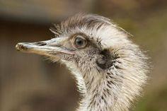 Besuch im Wildtierpark - http://fotografie-erlangen.de/blog/besuch-im-wildtierpark/?pk_campaign=Pinterest&pk_kwd=Besuch+im+Wildtierpark