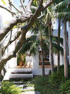 Plumeria Howea forsteriana, by William Dangar + Associates Tropical Garden Design, Tropical Style, Tropical Landscaping, Tropical Gardens, Tropical Vibes, Outdoor Spaces, Outdoor Living, Indoor Outdoor, Exterior Design
