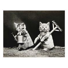Summer gardening vintage kitten dressed cats photo postcard