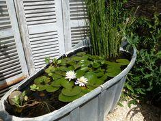 """Résultat de recherche d'images pour """"bassin de jardin dans baignoire zinc"""""""