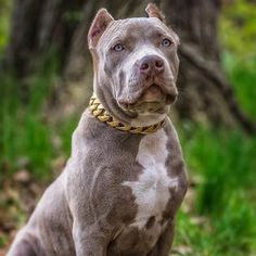 ba31c0d485e5 The Kilo, with its marine grade stainless steel base and custom PVD gold  finish,. BIG DOG CHAINS ®