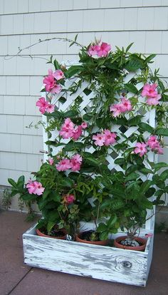 Tropicals forum: Bringing Mandevilla in for the winter (National Gardening Association)