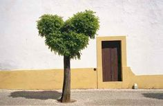 Heart tree, Evora, Portugal by António Carrapato