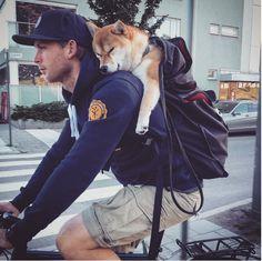 Stoppa allt! Möt hunden Charlie som cyklar runt på Stockholms gator och torg. Ge mig.. typ nu!