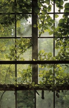 Everyone deserves a perfect world! Plant Aesthetic, Nature Aesthetic, Through The Window, Through The Looking Glass, Calming Images, Olive Green Color, Window View, Perfect World, Aesthetic Pictures