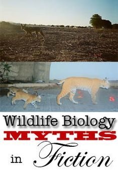 Wildlife Biology what a writer does