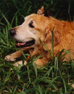 Photos: Photos: Bruce Weber's Dogs! A Canine Portfolio   Vanity Fair