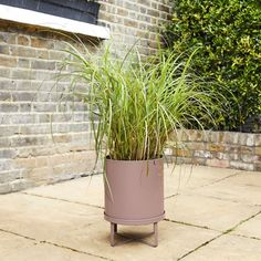 If you have a small garden or back yard, then this maiden outdoor plant and fern bau pot is a great statement piece - bringing life and style to your outdoor space. Although this variety is called 'red chief', this plant will give you a dramatic range of colours over the year.