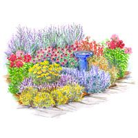 Garden plan with a mix of perennial flowers that will give the garden a beautiful burst of late-summer color. Garden Size: 12 x 12 feet  In this Plan:  ■Catmint  ■Lavender cotton  ■'Moonshine' yarrow  ■'Munstead' lavender  ■Penstemon  ■Phlox  ■Purple coneflower