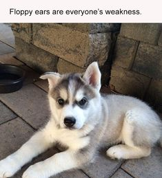 Just Viral Animal Pictures With Captions Of The Day - 14