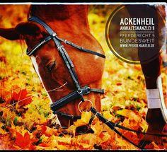 #pferderecht #anwalt #ackenheil bundesweite Rechtsberatung http://www.pferderechtler.de #pferderecht #pferdekauf #pferdehalterhaftung