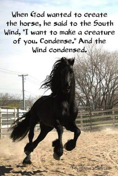 A horse is created by condense of the wind. When you are riding a horse such as you are flying with the wind. Horse Pictures, Animal Pictures, Inspirational Horse Quotes, Running Horses, Gifts For Horse Lovers, White Horses, Funny Animal Memes, Horse Barns, Beautiful Horses