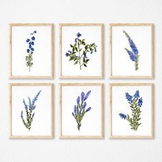 Set of 6 Blue Wildflowers Archival print of my original watercolor painting. Printed with archival Canon Lucia Pigment Inks on archival fine art paper. The purchase of this print does not transfer reproduction rights.