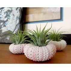 Home Decor . . . Round Seaside Planter       - Plant Life!