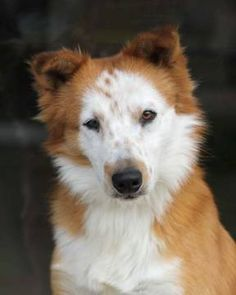 Adoption spotlight: Gunther - Border Collie Mix