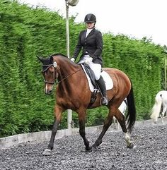 Unfortunately the website for Rehome My Horse has had to close My Horse, Horses, Wanted Ads, Competition, Animals, Animales, Animaux, Animal, Animais