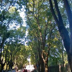 Fazzoletti di luce ed ombra, indovina dove a #Brescia il verde e l'azzurro si fondono insieme. #scoprilacittà #movingculturebrescia #atlantediviaggio