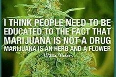 Cannabis is not a drug!!! it's a flower and a herb, you can cook with it!<::::::>~~'