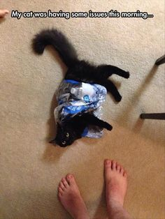 Funny Animal Pictures - 10 Images Funny Animal Pictures, Cute Funny Animals, Funny Cute, Animal Pics, Cute Cat Gif, Cute Cats, Adorable Kittens, Cat Fun, Cat Memes