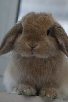Flopsy or mopsey ??