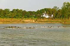 Nepal Tourism Board  Migrant birds at the back of Lumbini Temple.  ---Photograph by Susheel Shrestha