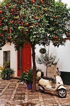 Seville Spain. I'm a little obsessed