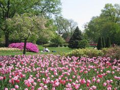 Approximately tulip bulbs are planted annually along with other spring flowering bulbs. Dogwoods, flowering cherries, wisteria and magnolias bloom throughout the gardens. When To Plant Vegetables, Spring Flowering Bulbs, Tulip Bulbs, Tulips Garden, Picnic Spot, Adventure Is Out There, Day Trips, Weekend Trips, Vacation Trips