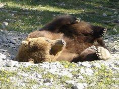 Alaska Photos - Brown Bear | iExplore