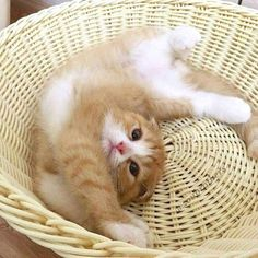 So many cute kittens videos compilation 2019 Kittens And Puppies, Cute Cats And Kittens, Baby Cats, I Love Cats, Kittens Cutest, Kittens Playing, Pretty Cats, Beautiful Cats, Animals Beautiful