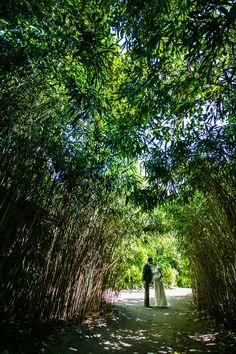 Bridal wedding photos at Melbourne Zoo with beautiful bamboo. Photo by Twenty One Studio.