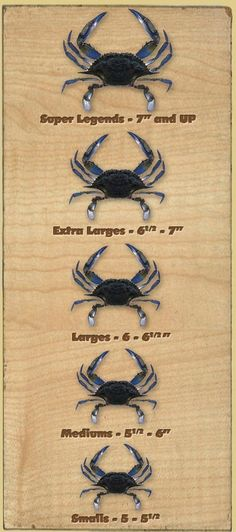 Maryland blue crabs. And please, learn to make your OWN crab cakes...with PRIDE in YOUR recipe!