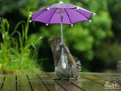 Max Ellis - Squirrel and Umbrella