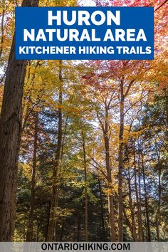 Huron Natural Area has some of the best hiking trails in Kitchener, Ontario. It's a stunning natural space featuring six trails, a beautiful pond, and forests with tall trees. Come along as I show you how to plan your visit! Kitchener hiking trails | Hiking trails in Kitchener | Kitchener Waterloo things to do | Kitchener Waterloo hiking trails | What to do in Kitchener | Things to do in Kitchener Waterloo | Ontario Hiking | Hiking trails in Ontario Hiking Spots, Hiking Trails, Travel Guides, Travel Tips, Best Hiking Gear, Waterloo Ontario, Kitchener Ontario, Ontario Travel, Hiking Europe