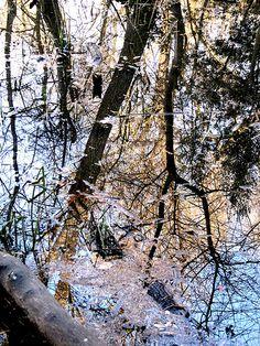 Reflets d'arbres dans l'ombre et d'arbres éclairés par le soleil dans l'étang de Vaugrenier à Villeneuve-Loubet