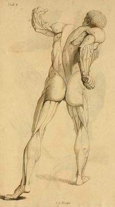 Elements of anatomy : designed for the use of s...
