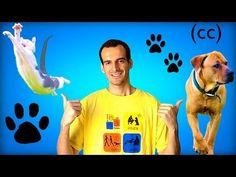 Porque Tener Un Perro En Casa | Buzz Post