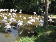 Parco Zoo Punta Verde (Lignano Sabbiadoro) Italy