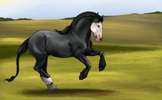 Colonel VictorDCS Our first Kahuvaa stallion ID# 21 Stable name: Colonel V./Cool Breed:pure #Kahuvaa-horses Gender: stallion Age: 6 Height: 1.76 Color: Black minimal spash Genotipe: Ee/aa/nSpl Disc...