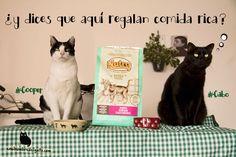 MiauRegalo de comida para gatos, ¡gratis durante dos meses! Más: http://enelnombredelgato.com/comida-nutro-para-gatos-resena-3-kilos-de-regalo-sabroso/