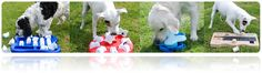 Interactive pet activity toys & treat puzzle games  Keep your pet occupied and mentally stimulated